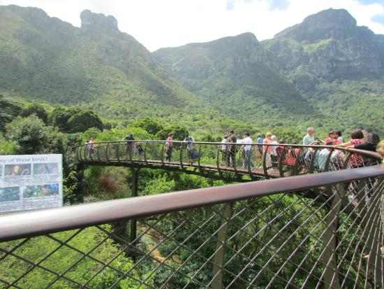 Kirstenbosch National