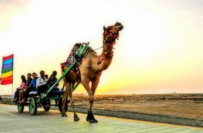 Rann Utsav Camel Cart Ride