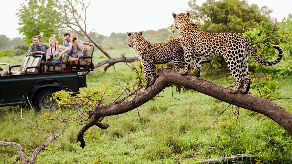 Leopard Safari South Africa